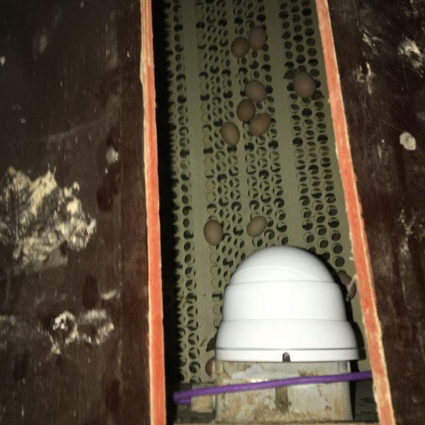 Observatie van een transportband met eieren